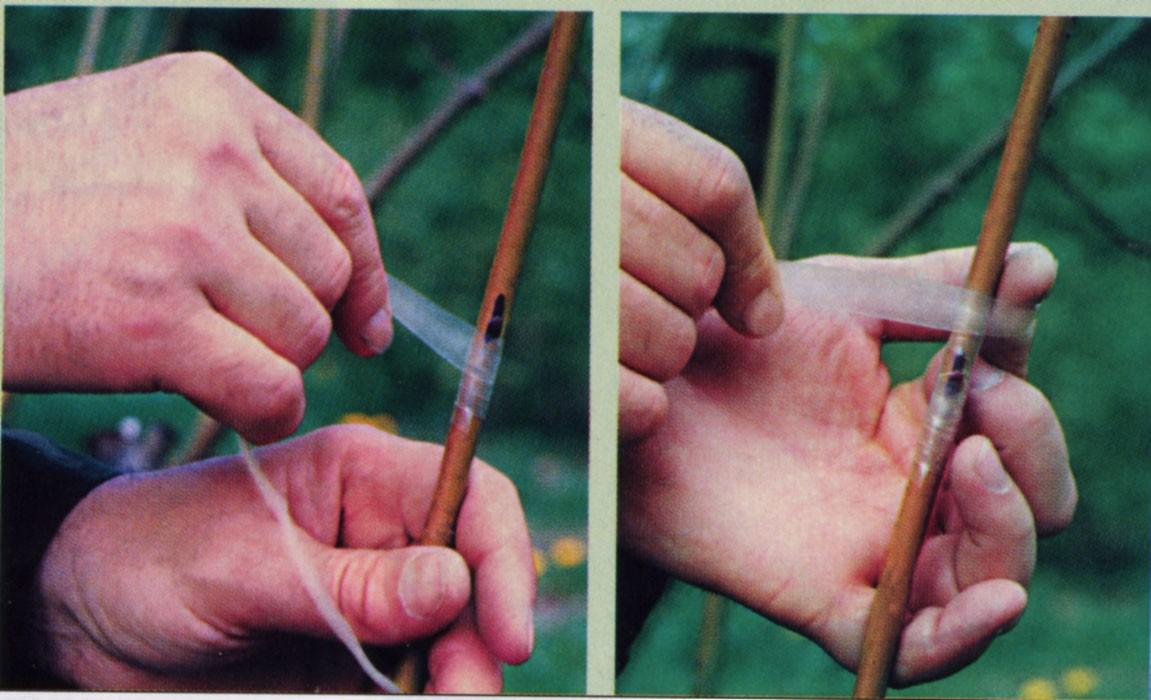 Уход за деревьями черенками после прививки 115
